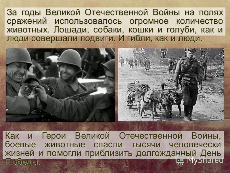 За годы Великой Отечественной Войны на полях сражений использовалось огромное количество животных. Лошади, собаки, кошки и голуби, как и люди совершали подвиги. И гибли, как и люди. Как и Герои Великой Отечественной Войны, боевые животные спасли тыся