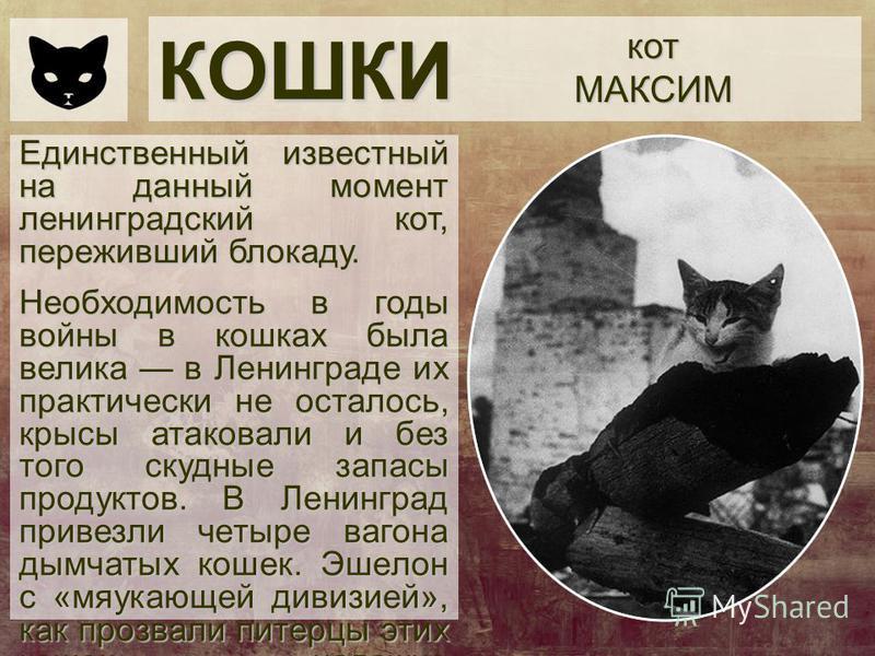 КОШКИ котМАКСИМ Единственный известный на данный момент ленинградский кот, переживший блокаду. Необходимость в годы войны в кошках была велика в Ленинграде их практически не осталось, крысы атаковали и без того скудные запасы продуктов. В Ленинград п