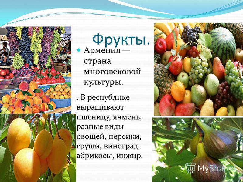 Фрукты. Армения страна многовековой культуры.. В республике выращивают пшеницу, ячмень, разные виды овощей, персики, груши, виноград, абрикосы, инжир.