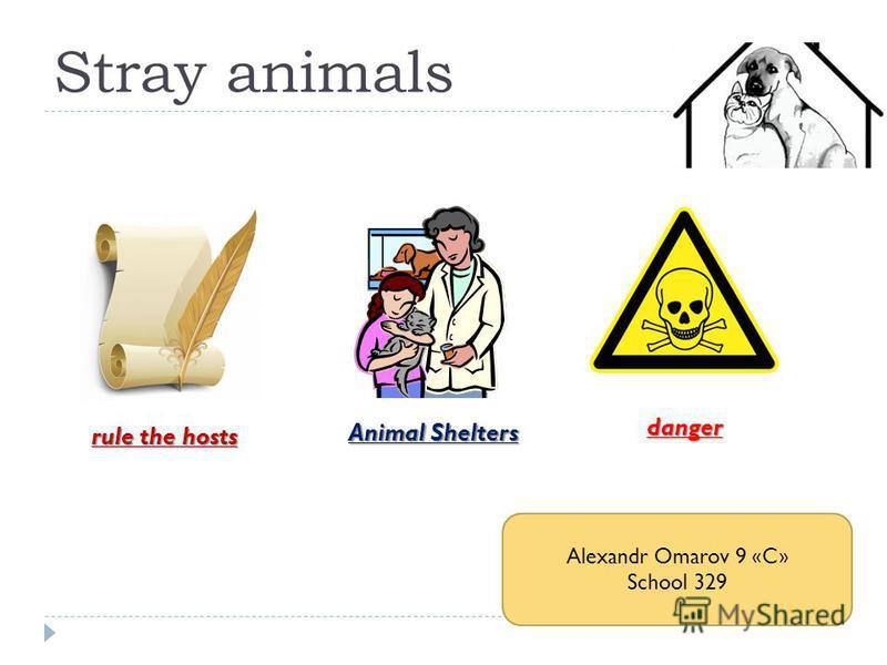 Stray animals rule the hosts Animal Shelters danger Alexandr Omarov 9 «C» School 329
