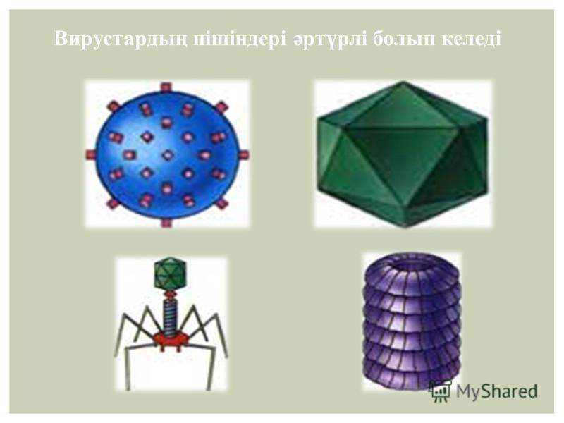 Вирустардың пішіндері әртүрлі болып келеді