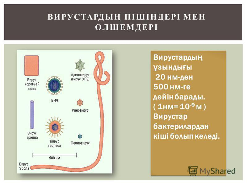 ВИРУСТАРДЫҢ ПІШІНДЕРІ МЕН ӨЛШЕМДЕРІ Вирустарды ң ұ зонды ғ ы 20 нм-ден 500 нм-ге дейін барады. ( 1 нм= 10 -9 м ) Вирустар бактерилардан кіші болып келеді. Вирустарды ң ұ зонды ғ ы 20 нм-ден 500 нм-ге дейін барады. ( 1 нм= 10 -9 м ) Вирустар бактерила
