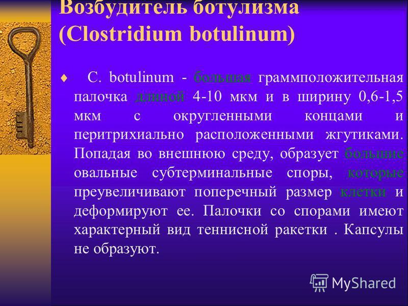 Возбудитель ботулизма (Clostridium botulinum) C. botulinum - большая грамм положительная палочка длиной 4-10 мкм и в ширину 0,6-1,5 мкм с округленными концами и перитрихиально расположенными жгутиками. Попадая во внешнюю среду, образует большие оваль