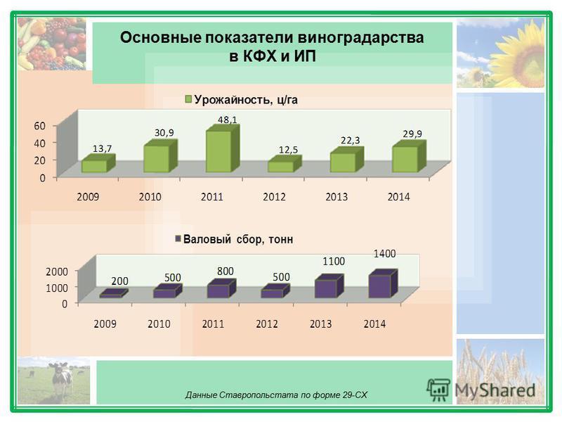 Основные показатели виноградарства в КФХ и ИП Данные Ставропольстата по форме 29-СХ