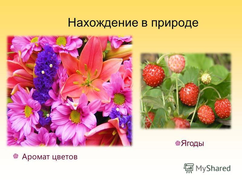 Нахождение в природе Аромат цветов Ягоды