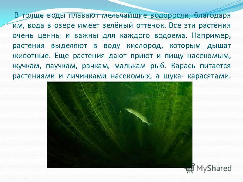 В толще воды плавают мельчайшие водоросли, благодаря им, вода в озере имеет зелёный оттенок. Все эти растения очень ценны и важны для каждого водоема. Например, растения выделяют в воду кислород, которым дышат животные. Еще растения дают приют и пищу