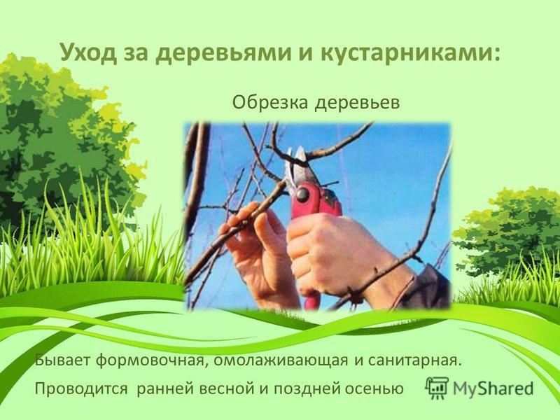 Уход за деревьями и кустарниками: Обрезка деревьев Проводится ранней весной и поздней осенью Бывает формовочная, омолаживающая и санитарная.