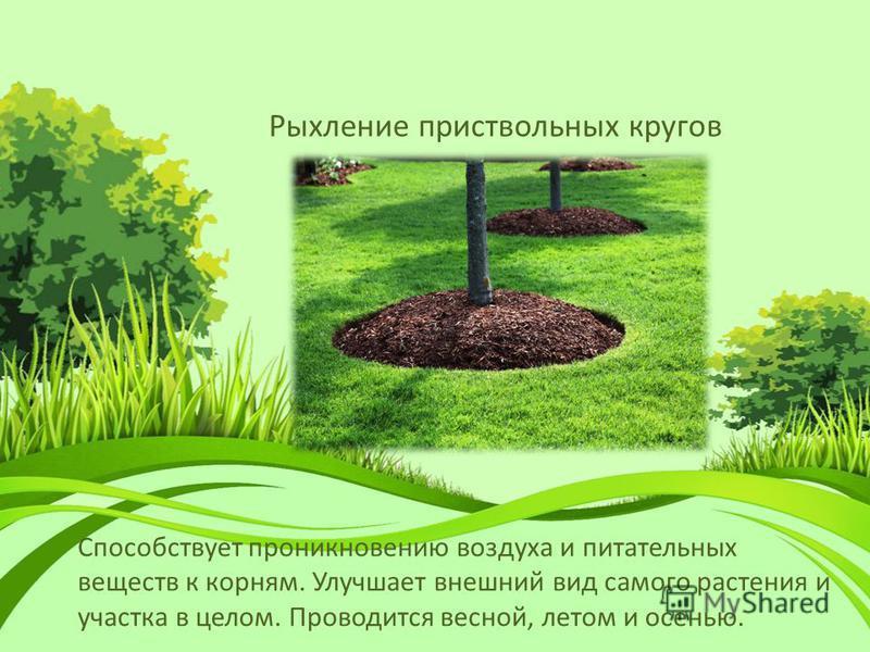 Рыхление приствольных кругов Способствует проникновению воздуха и питательных веществ к корням. Улучшает внешний вид самого растения и участка в целом. Проводится весной, летом и осенью.