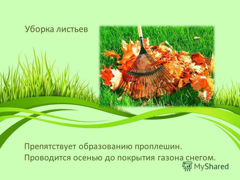 Уборка листьев Препятствует образованию проплешин. Проводится осенью до покрытия газона снегом.