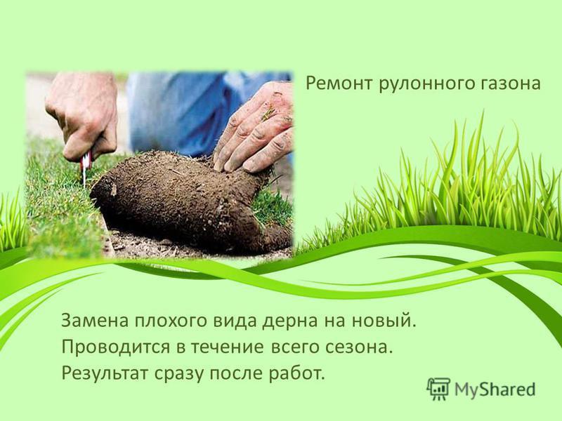Ремонт рулонного газона Замена плохого вида дерна на новый. Проводится в течение всего сезона. Результат сразу после работ.