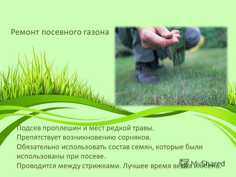 Ремонт посевного газона Подсев проплешин и мест редкой травы. Препятствует возникновению сорняков. Обязательно использовать состав семян, которые были использованы при посеве. Проводится между стрижками. Лучшее время весна и осень.