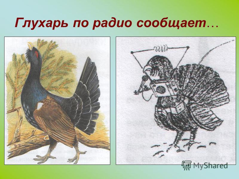 Орнитолог - специалист, изучающий птиц Кулик. Наш герой совсем не велик, размером с воробья.