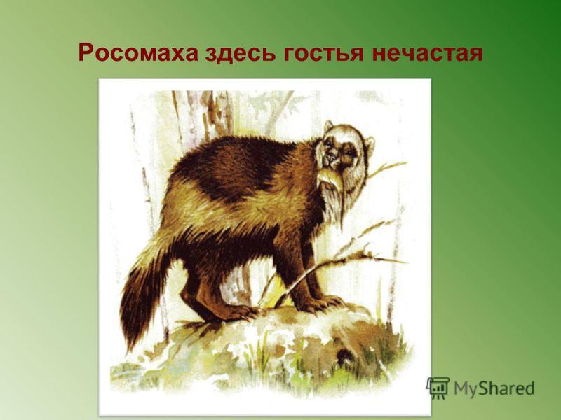 Лисица-истребитель мышевидных грызунов- вредителей культурных растений