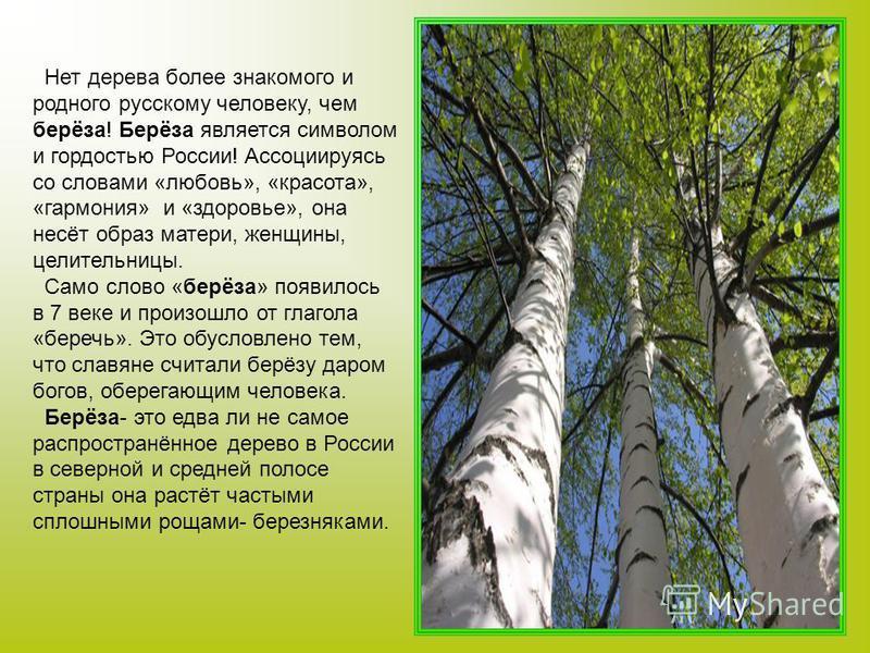 Нет дерева более знакомого и родного русскому человеку, чем берёза! Берёза является символом и гордостью России! Ассоциируясь со словами «любовь», «красота», «гармония» и «здоровье», она несёт образ матери, женщины, целительницы. Само слово «берёза»
