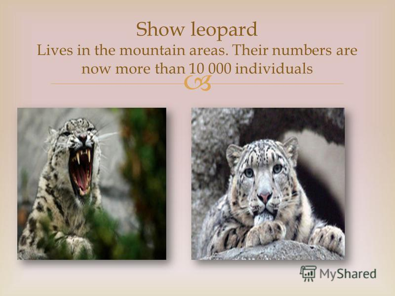Show leopard Lives in the mountain areas. Their numbers are now more than 10 000 individuals