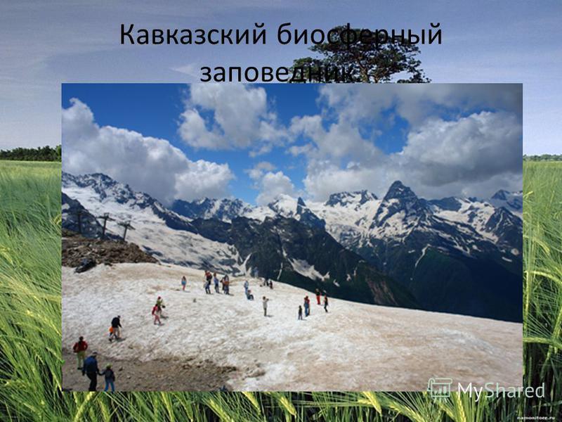 Кавказский биосферный заповедник.