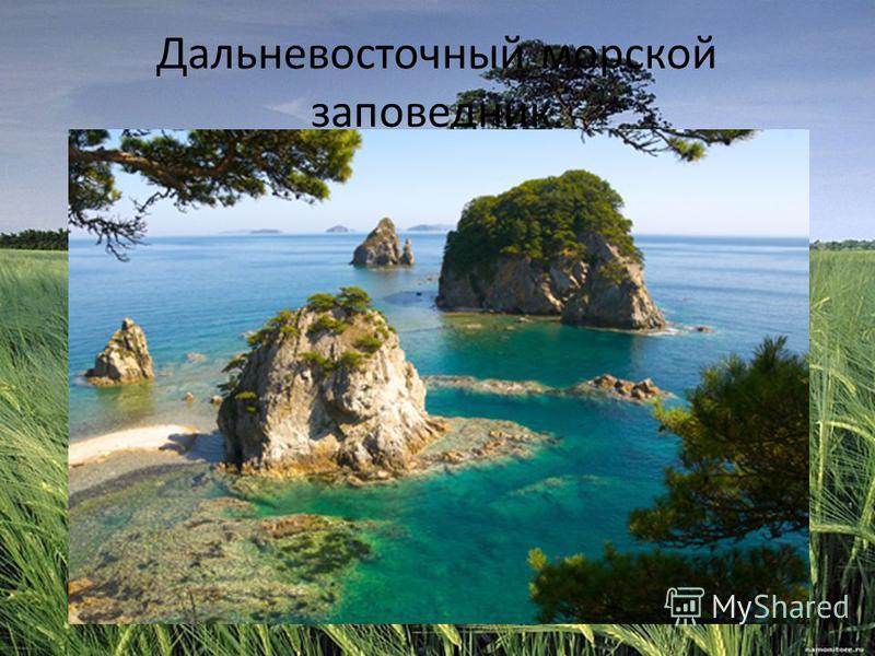 Дальневосточный морской заповедник.