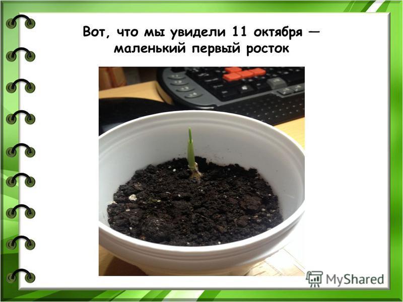 Я посадил чеснок 5 октября