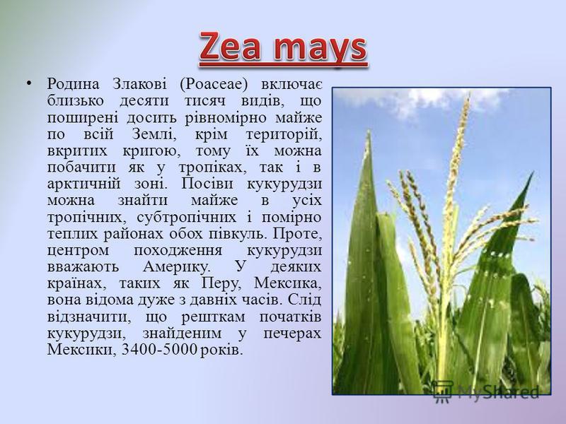 Родина Злакові (Poaceaе) включає близько десяти тисяч видів, що поширені досить рівномірно майже по всій Землі, крім територій, вкритих кригою, тому їх можна побачити як у тропіках, так і в арктичній зоні. Посіви кукурудзи можна знайти майже в усіх т