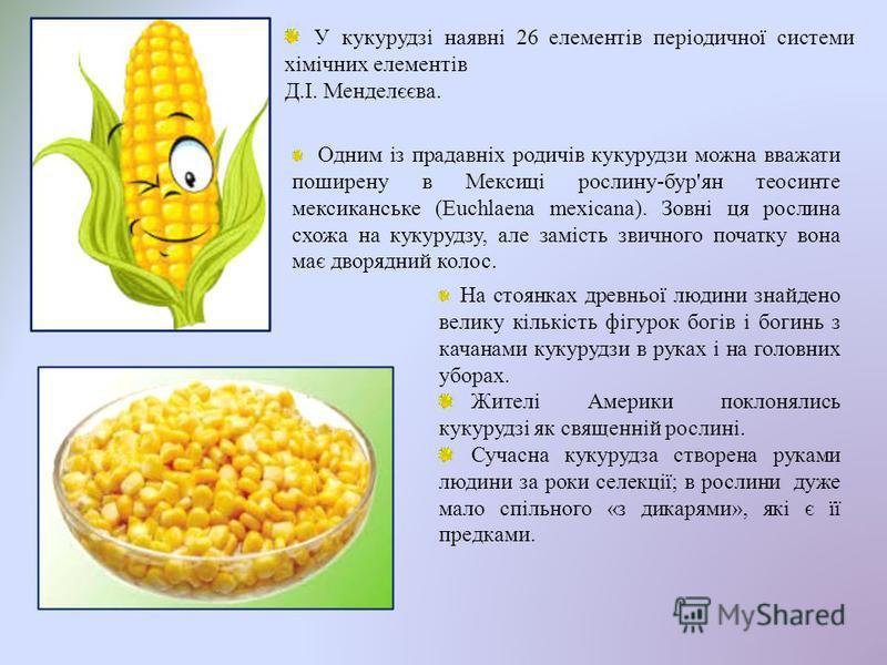 У кукурудзі наявні 26 елементів періодичної системи хімічних елементів Д.І. Менделєєва. Одним із прадавніх родичів кукурудзи можна вважати поширену в Мексиці рослину-бур'ян теосинте мексиканське (Euchlaena mexicana). Зовні ця рослина схожа на кукуруд