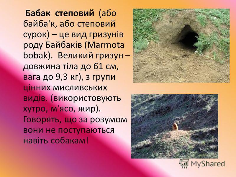 Бабак степовий (або байба'к, або степовий сурок) – це вид гризунів роду Байбаків (Marmota bobak). Великий гризун – довжина тіла до 61 см, вага до 9,3 кг), з групи цінних мисливських видів. (використовують хутро, м'ясо, жир). Говорять, що за розумом в