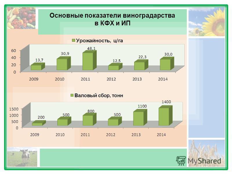 Основные показатели виноградарства в КФХ и ИП