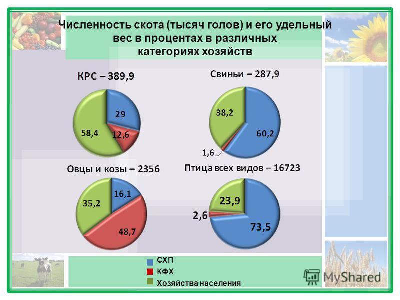 Численность скота (тысяч голов) и его удельный вес в процентах в различных категориях хозяйств СХП КФХ Хозяйства населения