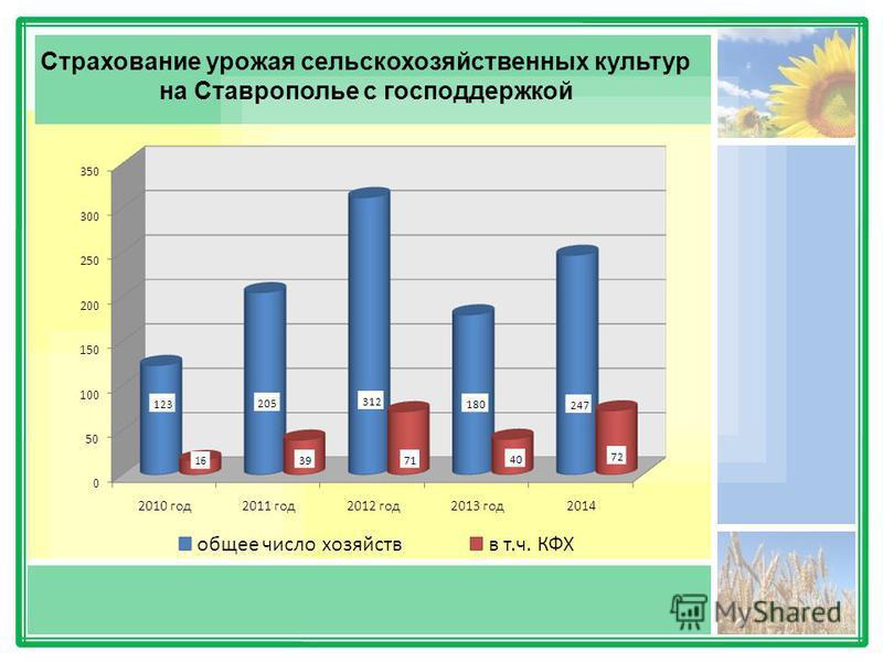 Страхование урожая сельскохозяйственных культур на Ставрополье с господдержкой