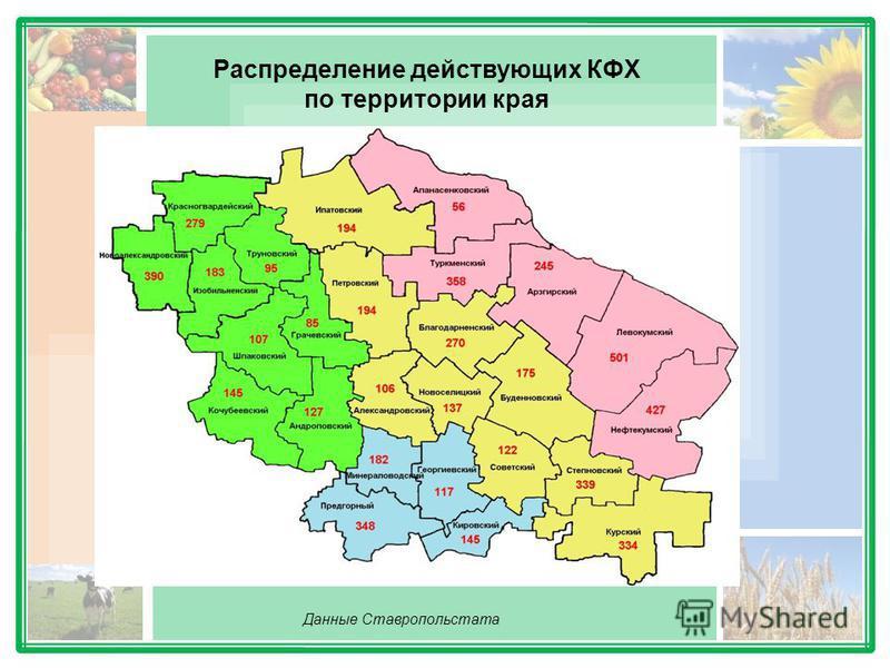 Распределение действующих КФХ по территории края Данные Ставропольстата