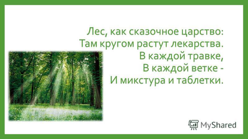 Лес, как сказочное царство: Там кругом растут лекарства. В каждой травке, В каждой ветке - И микстура и таблетки.