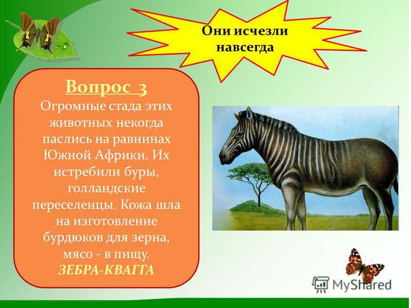 Они исчезли навсегда Вопрос 3 Огромные стада этих животных некогда паслись на равнинах Южной Африки. Их истребили буры, голландские переселенцы. Кожа шла на изготовление бурдюков для зерна, мясо - в пищу. ЗЕБРА-КВАГГА
