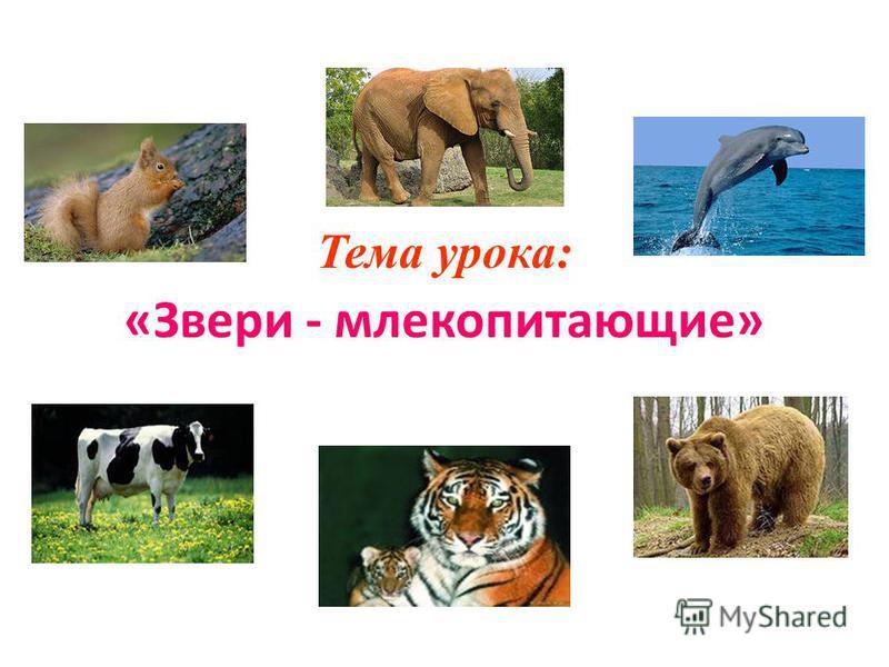 Тема урока: «Звери - млекопитающие»