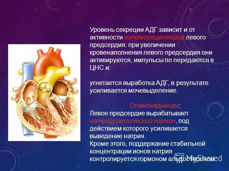 Уровень секреции АДГ зависит и от активности волюморецепторов левого предсердия: при увеличении кровенаполнения левого предсердия они активируются, импульсы по передаются в ЦНС и: угнетается выработка АДГ, в результате усиливается мочевыделение. Олим