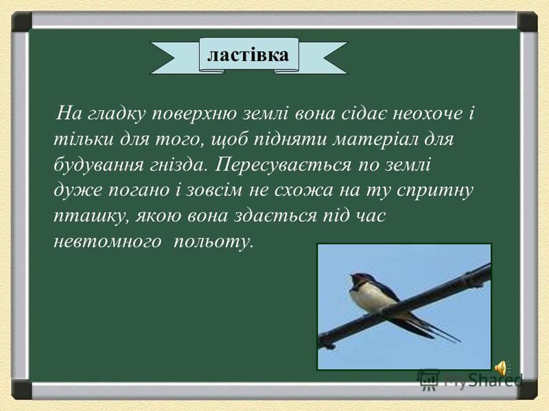 стриж Птах, який рідко сідає на землю або дроти. Він харчується і навіть спить у повітрі.