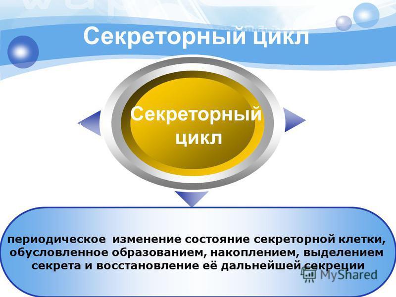Секреторный цикл Секреторный цикл периодическое изменение состояние секреторной клетки, обусловленное образованием, накоплением, выделением секрета и восстановление её дальнейшей секреции Text