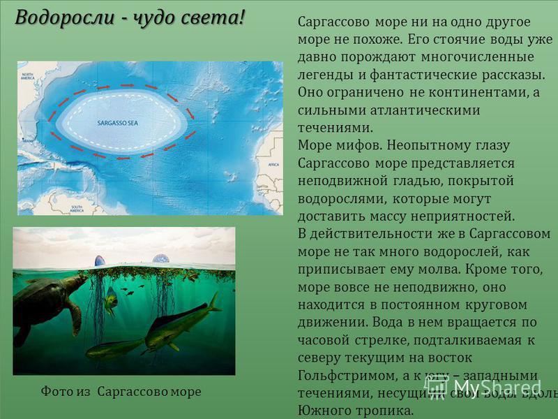 Водоросли - чудо света ! Саргассово море ни на одно другое море не похоже. Его стоячие воды уже давно порождают многочисленные легенды и фантастические рассказы. Оно ограничено не континентами, а сильными атлантическими течениями. Море мифов. Неопытн