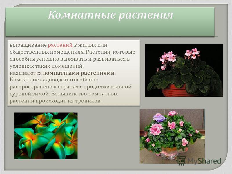выращивание растений в жилых или общественных помещениях. Растения, которые способны успешно выживать и развиваться в условиях таких помещений, называются комнатными растениями. Комнатное садоводство особенно распространено в странах с продолжительно