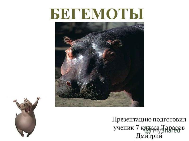БЕГЕМОТЫ Презентацию подготовил ученик 7 класса Тарасов Дмитрий
