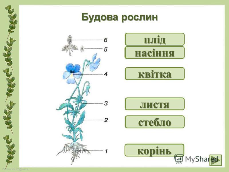 FokinaLida.75@mail.ru Будова рослин ? корінь ? стебло ? листя ? квітка ? насіння ? плід