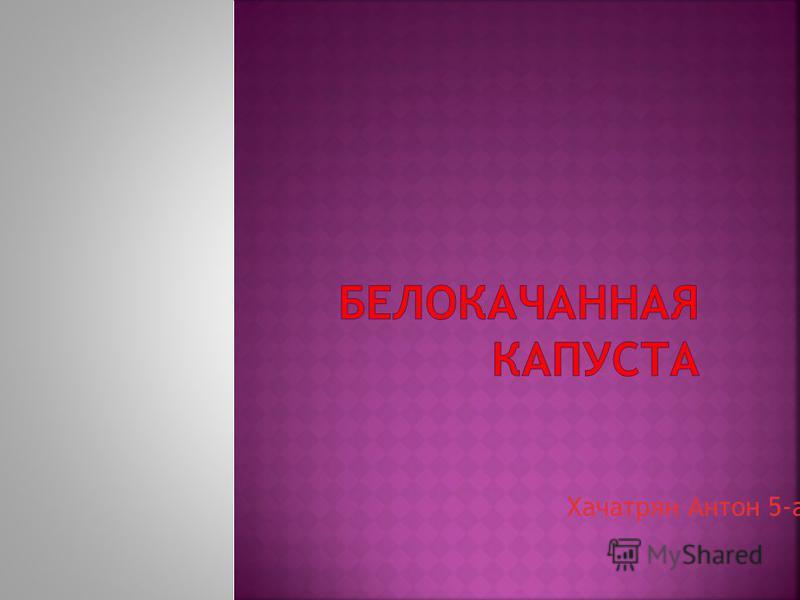 Хачатрян Антон 5-а