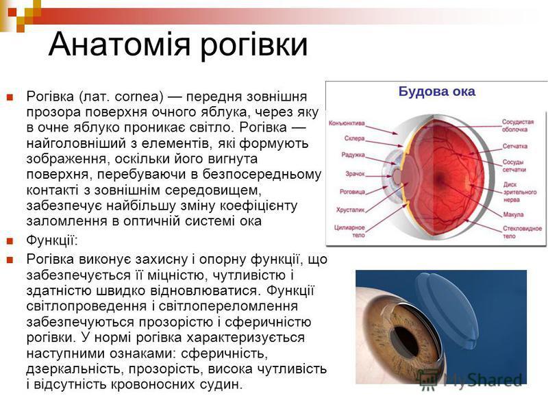 Анатомія рогівки Рогівка (лат. cornea) передня зовнішня прозора поверхня очного яблука, через яку в очне яблуко проникає світло. Рогівка найголовніший з елементів, які формують зображення, оскільки його вигнута поверхня, перебуваючи в безпосередньому