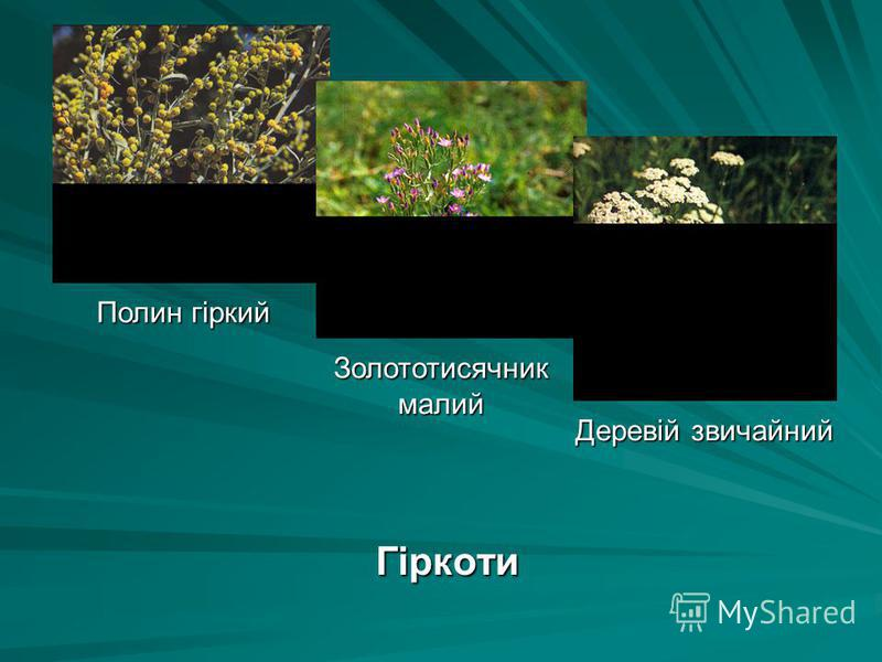 Гіркоти Полин гіркий Золототисячник малий Деревій звичайний