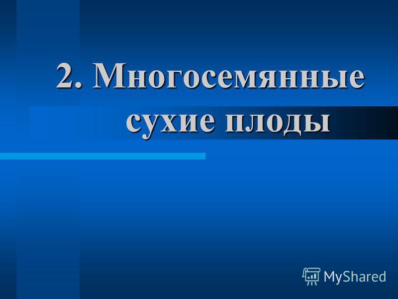 2. М ногосемянные сухие плоды