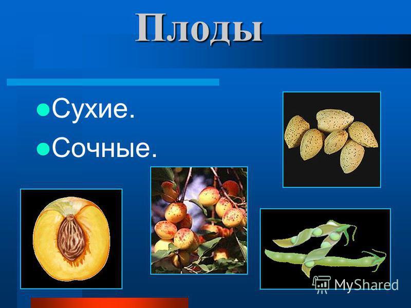 Плоды Сухие. Сочные.