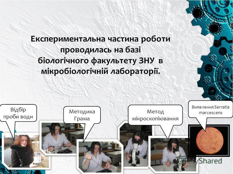 Експериментальна частина роботи проводилась на базі біологічного факультету ЗНУ в мікробіологічній лабораторії. Відбір проби води Методика Грама Метод мікроскопіювання Виявлення Serratia marcescens