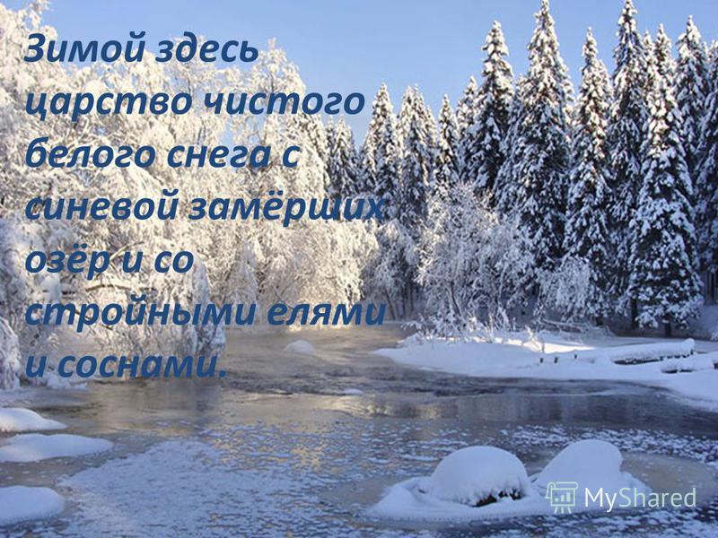 Зимой здесь царство чистого белого снега с синевой замёрших озёр и со стройными елями и соснами.