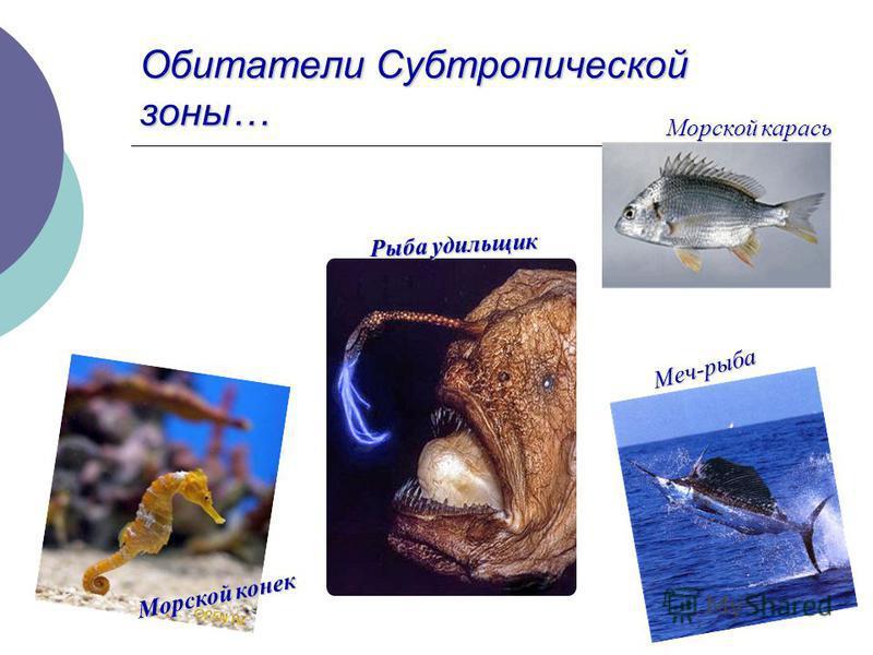 Обитатели Субтропической зоны… Морской карась Морской конек Меч-рыба Рыба удильщик