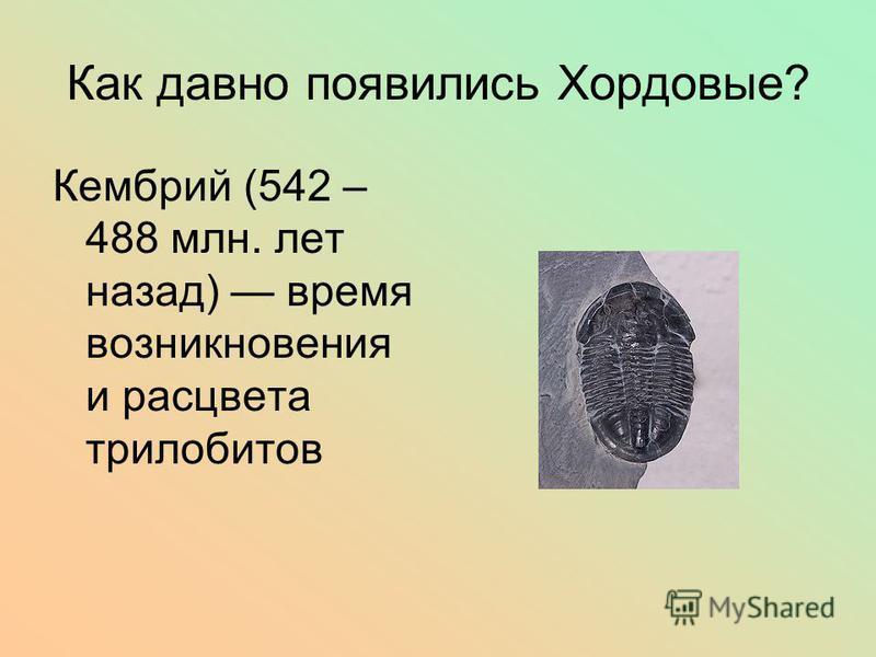 Как давно появились Хордовые? Кембрий (542 – 488 млн. лет назад) время возникновения и расцвета трилобитов