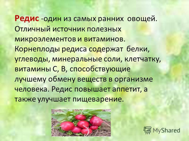 Редис -один из самых ранних овощей. Отличный источник полезных микроэлементов и витаминов. Корнеплоды редиса содержат белки, углеводы, минеральные соли, клетчатку, витамины С, В, способствующие лучшему обмену веществ в организме человека. Редис повыш