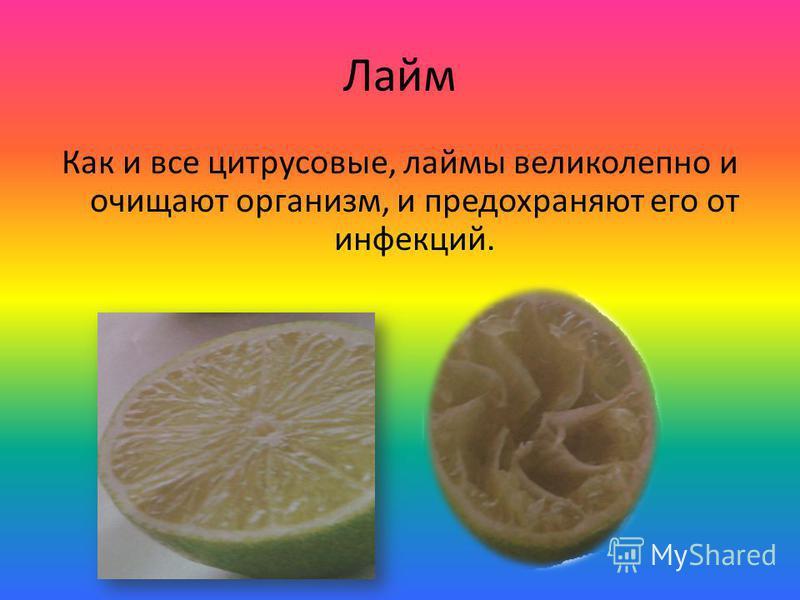 Лайм Как и все цитрусовые, лаймы великолепно и очищают организм, и предохраняют его от инфекций.